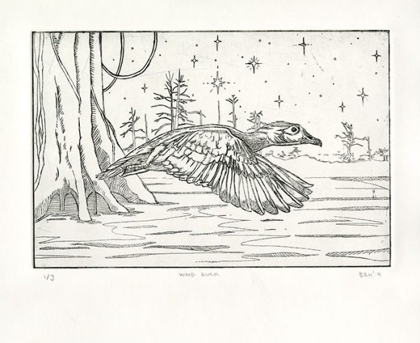 """""""Wood Duck"""", intaglio etching, 6""""x9"""", 2013"""
